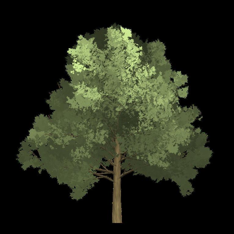 drzewo, element drewna, przemiana drewna, żywioł drewna, element drzewa, przemiana drzewa, żywioł drzewa